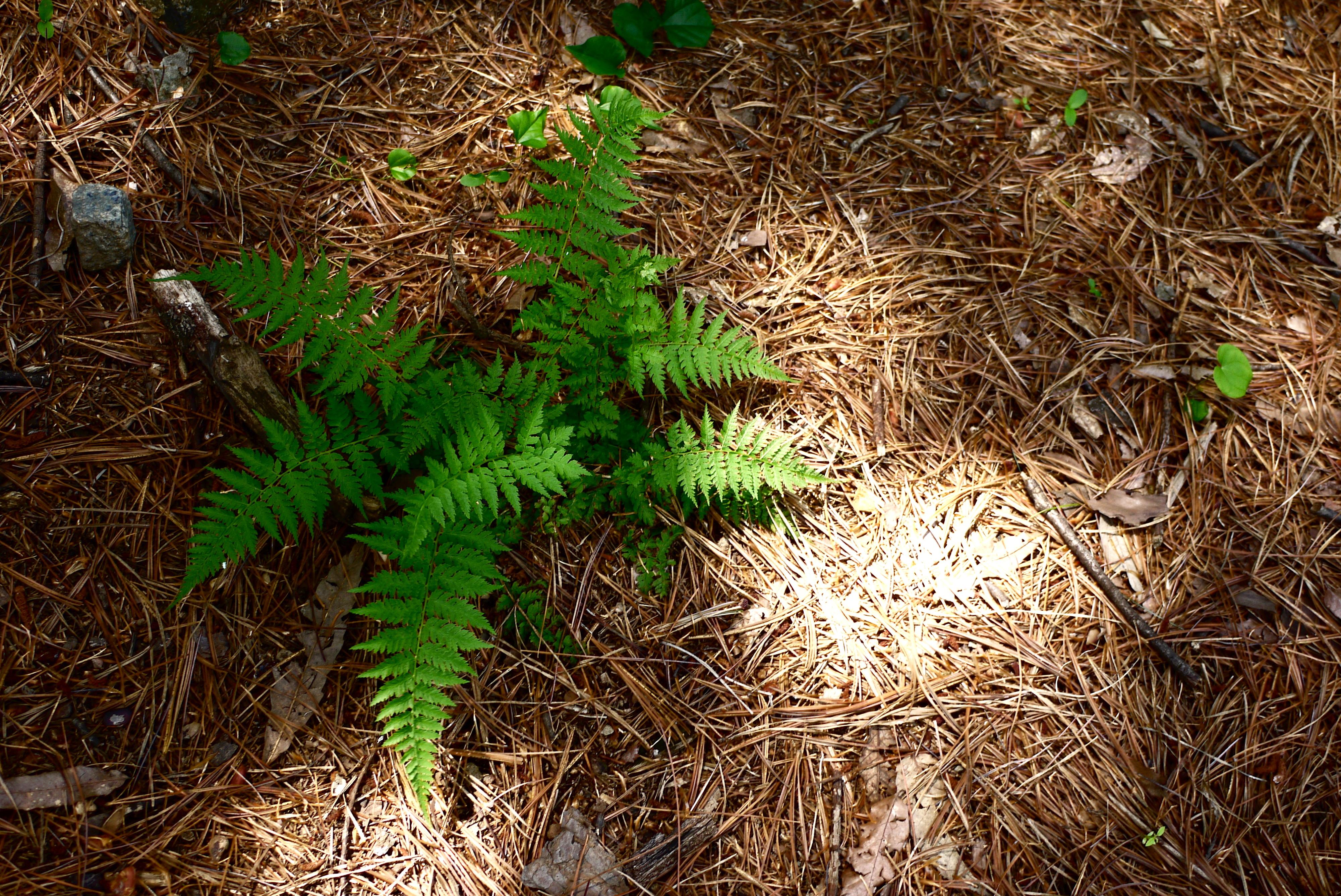자라고 있는 작은 식물