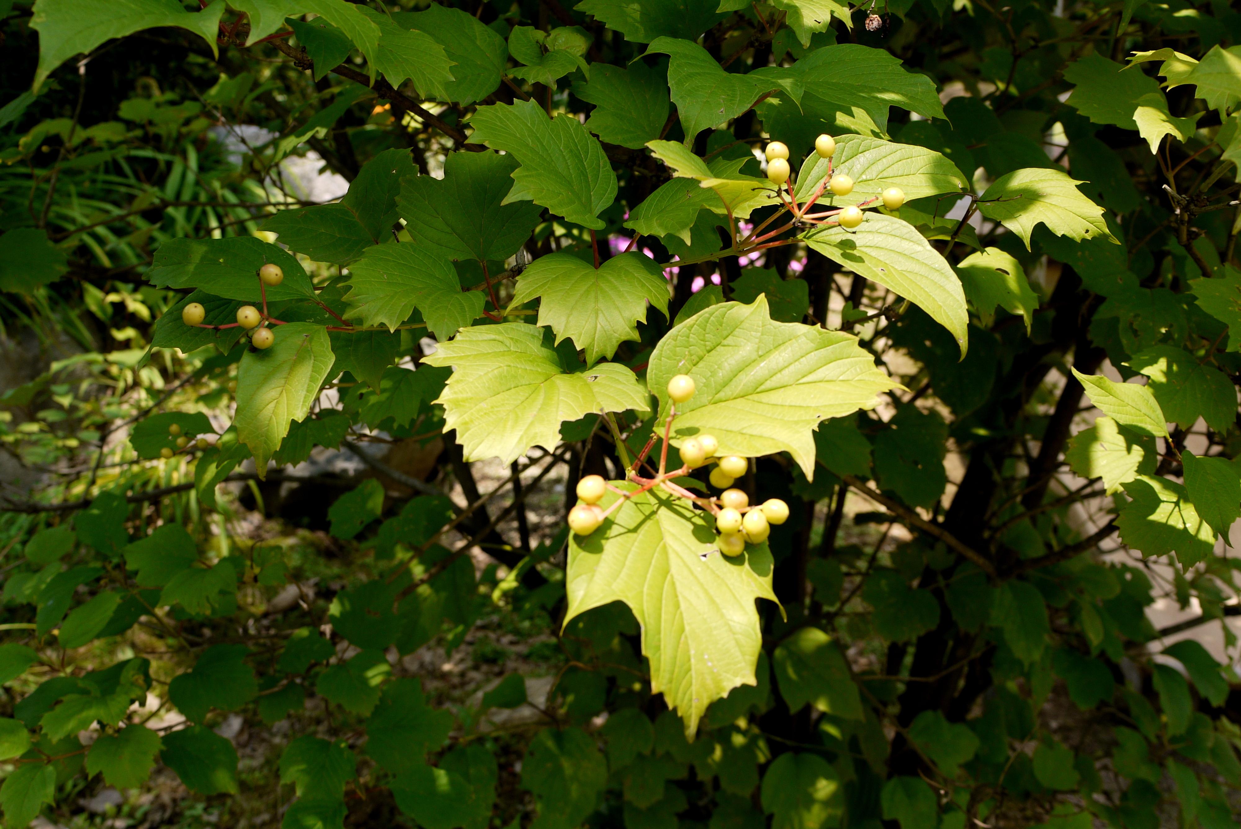 열매가 열린 나무