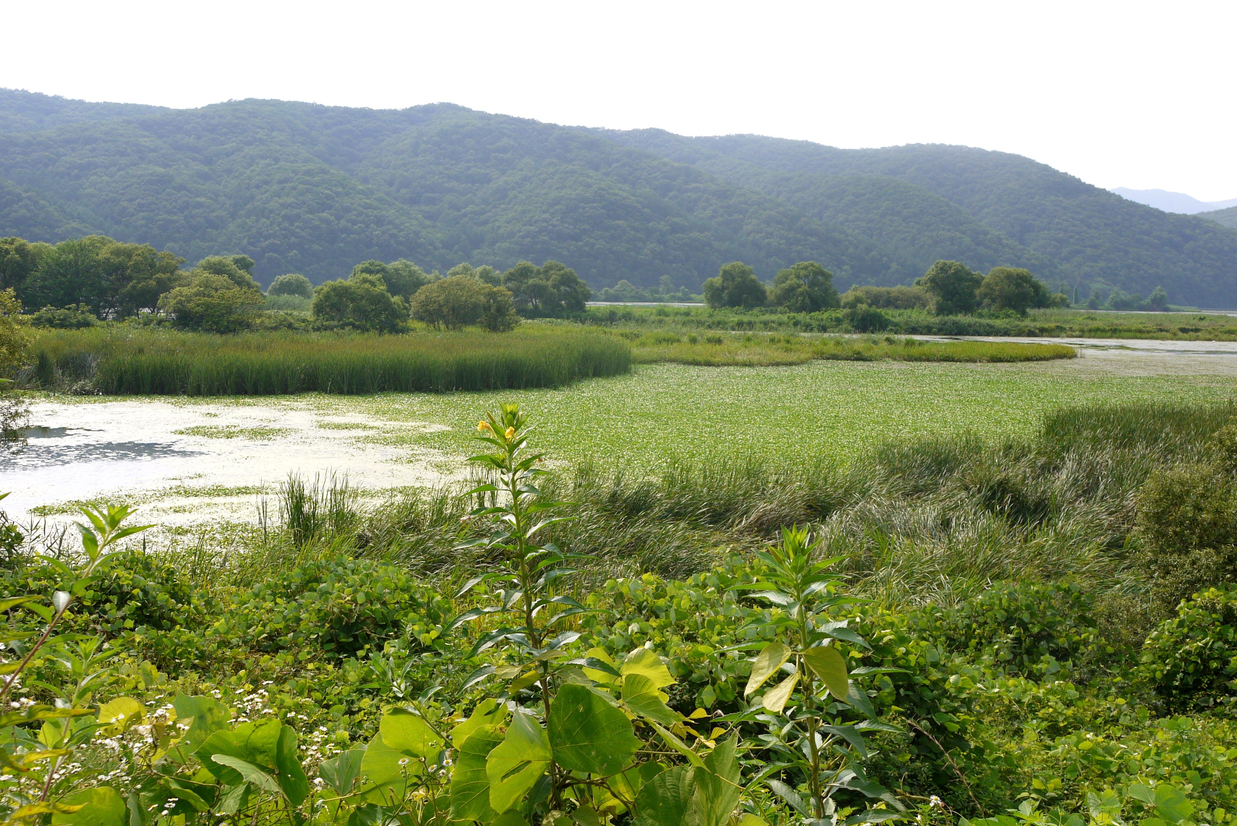 연못이 보이는 생태공원 전경
