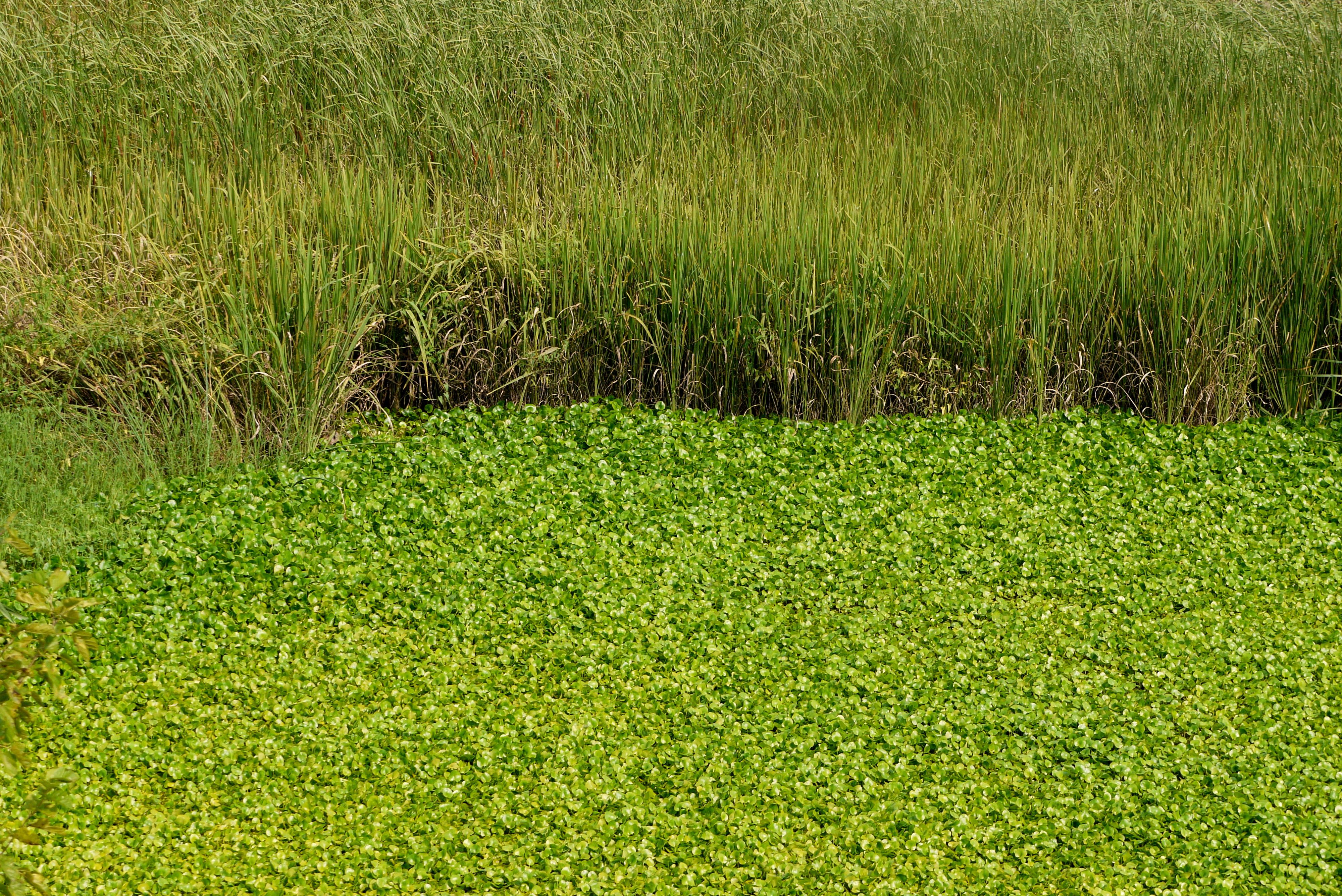 물풀로 가득찬 연못