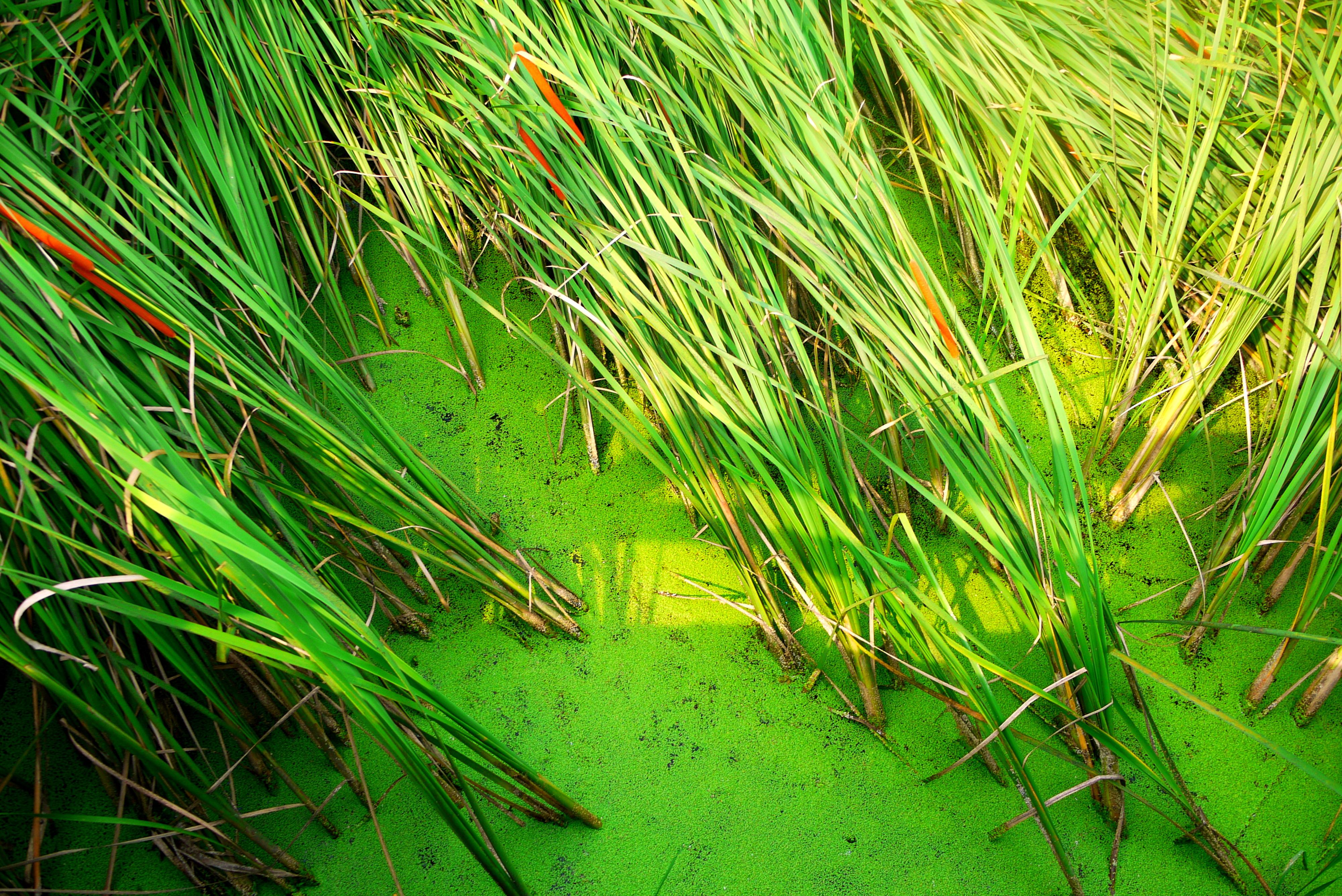 물풀이 자란 습지의 모습