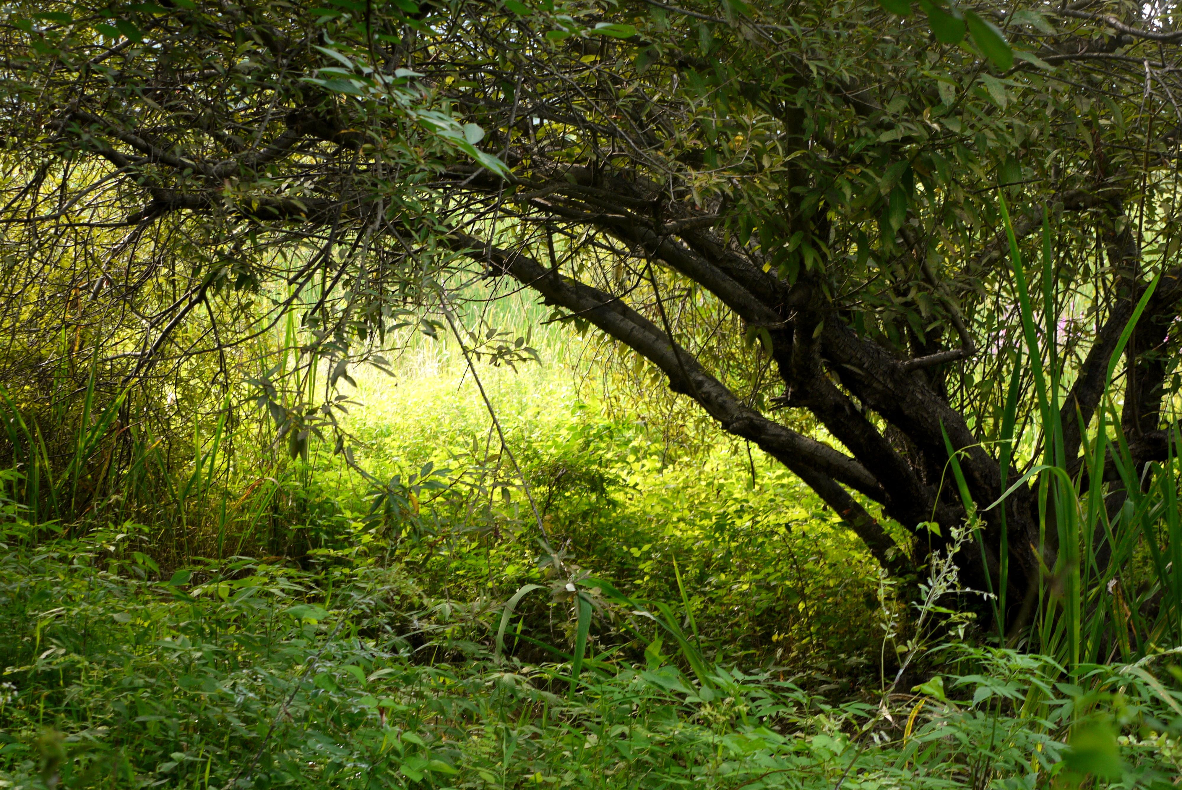 습지 사이에 자란 나무