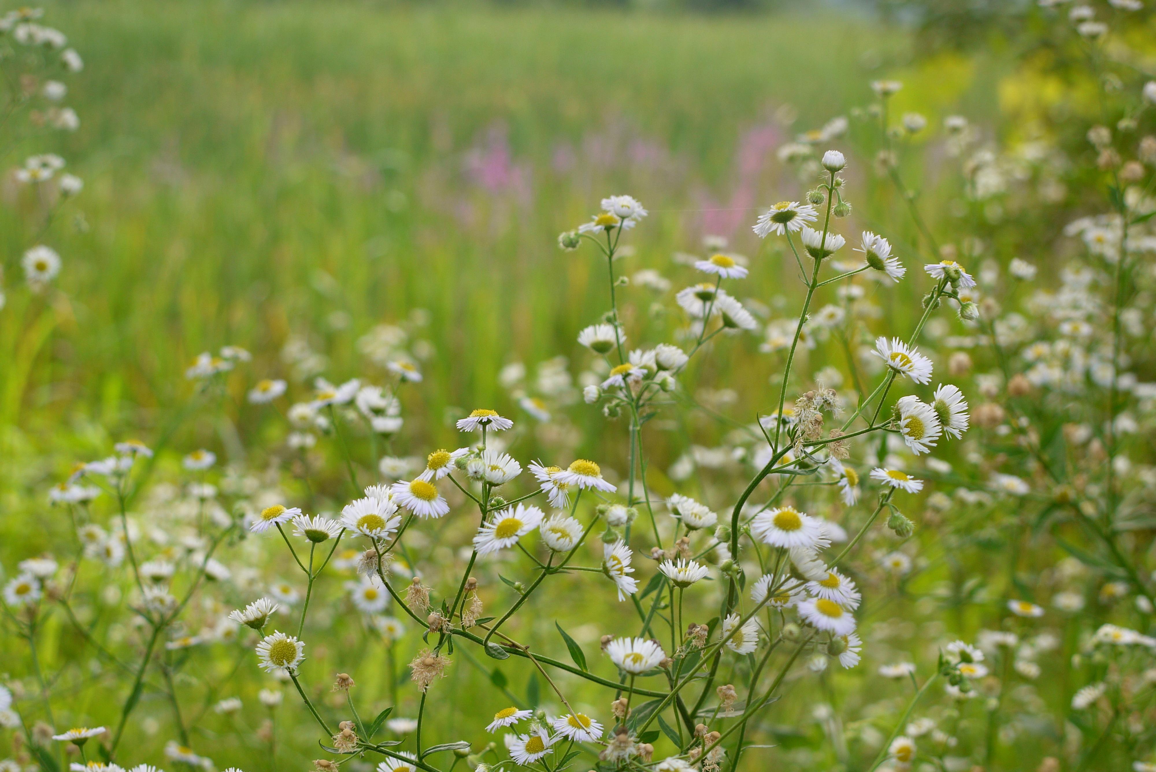 습지에 피어난 꽃들