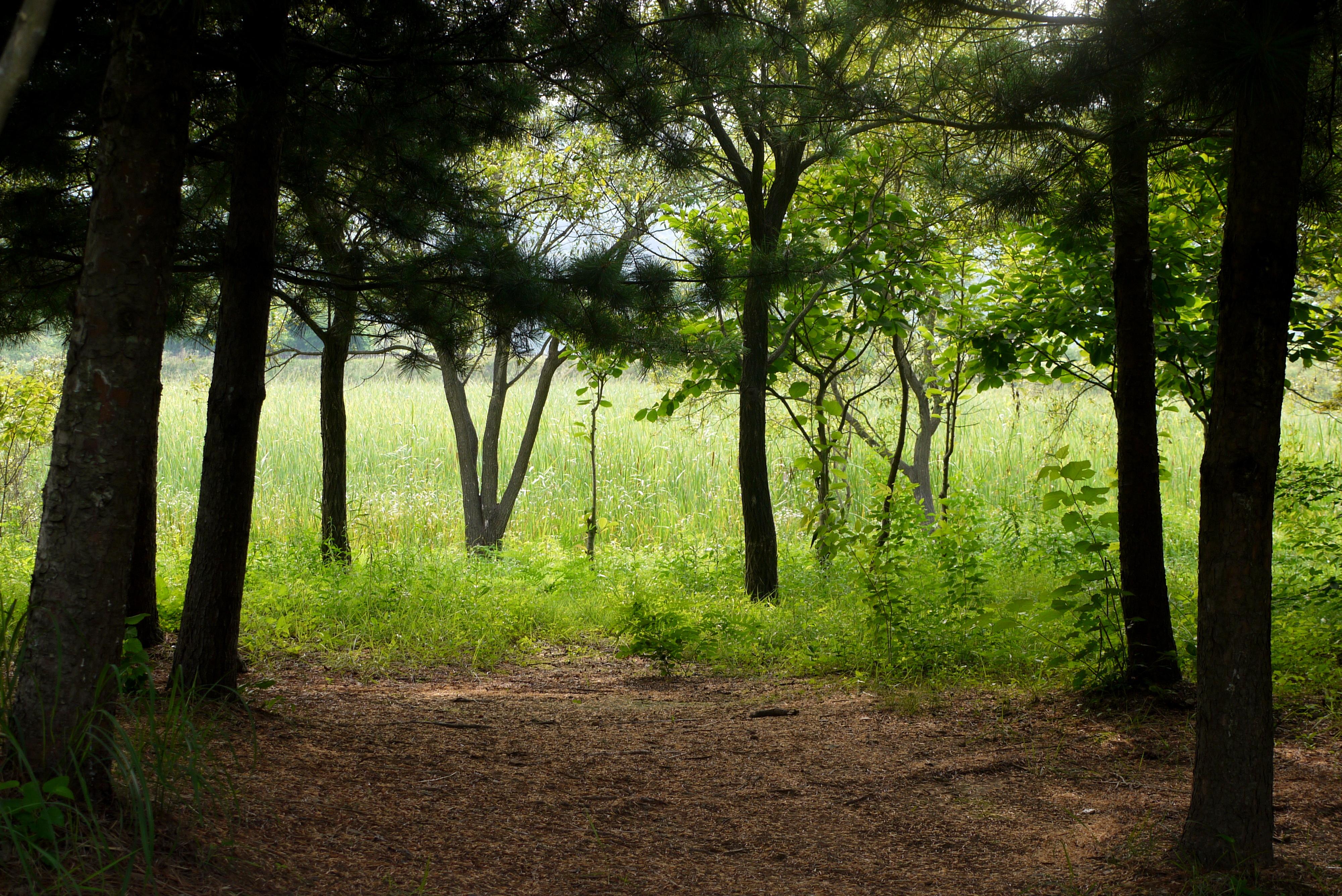 숲속안에서 보이는 습지의 모습