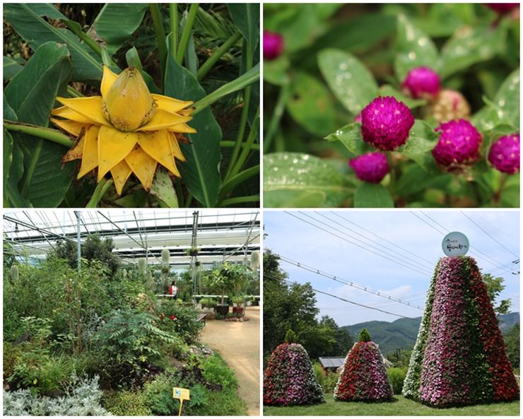 온실정원 휴의 꽃과 식물들