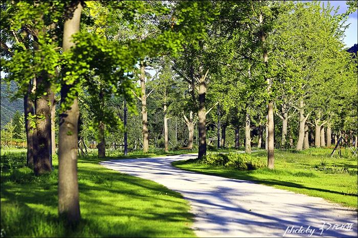 나무 그늘이 드리워진 숲길 산책로