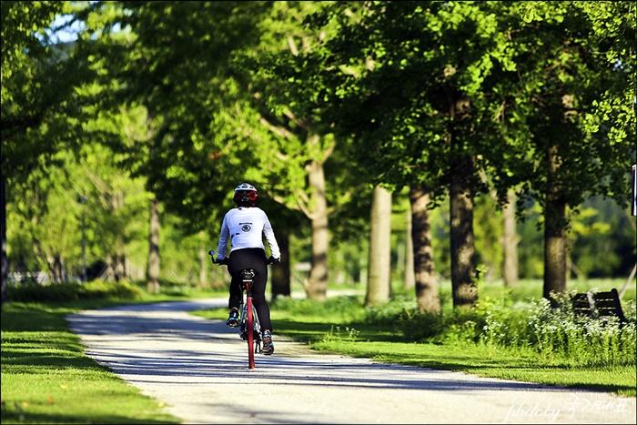 자전거를 타는 사람의 뒷모습