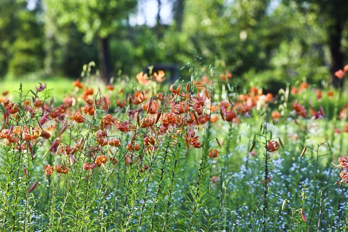 야생화 단지에서 자라고 있는 붉은 꽃