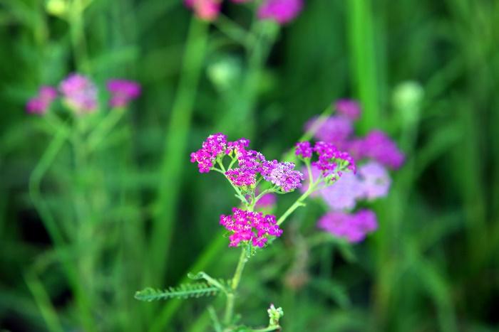 야생화 단지에서 자라는 보라색 꽃