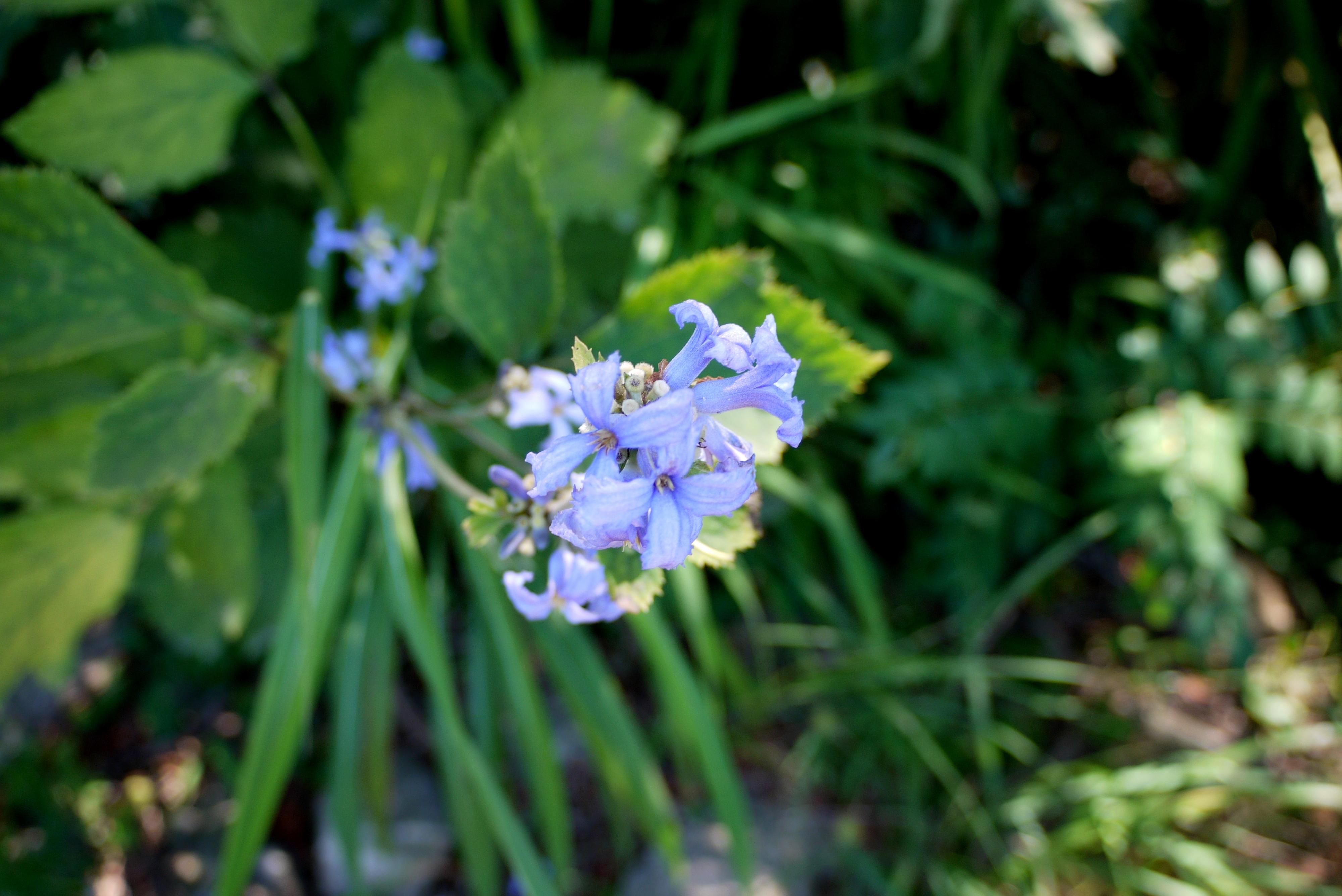 남한산성에 핀 꽃들
