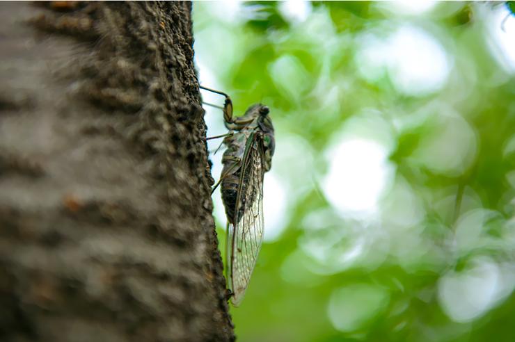 나무에 매달려 있는 매미