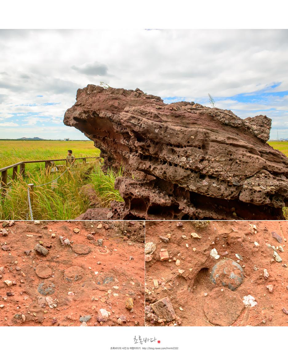 공룡알이 발견된 바위