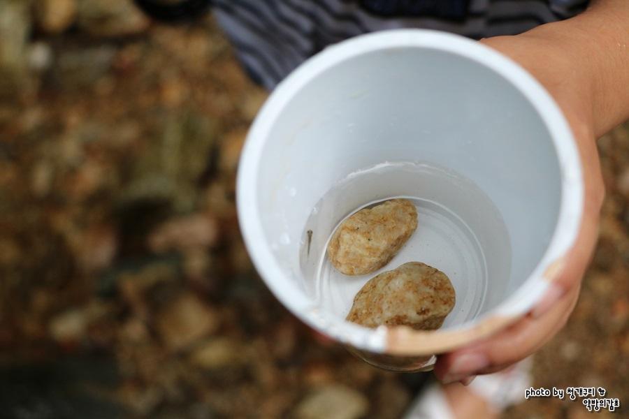 커피컵에 담겨진 잡은 물고기