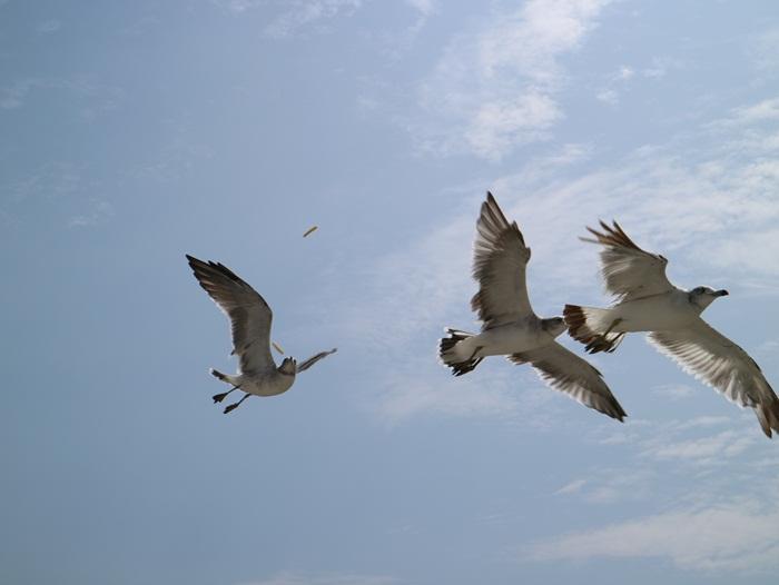 날아가는 갈매기들