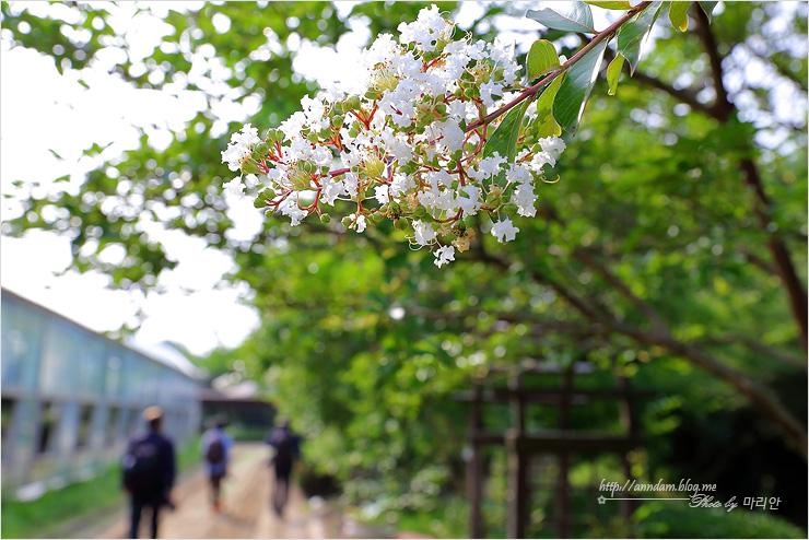 산책가에 핀 꽃