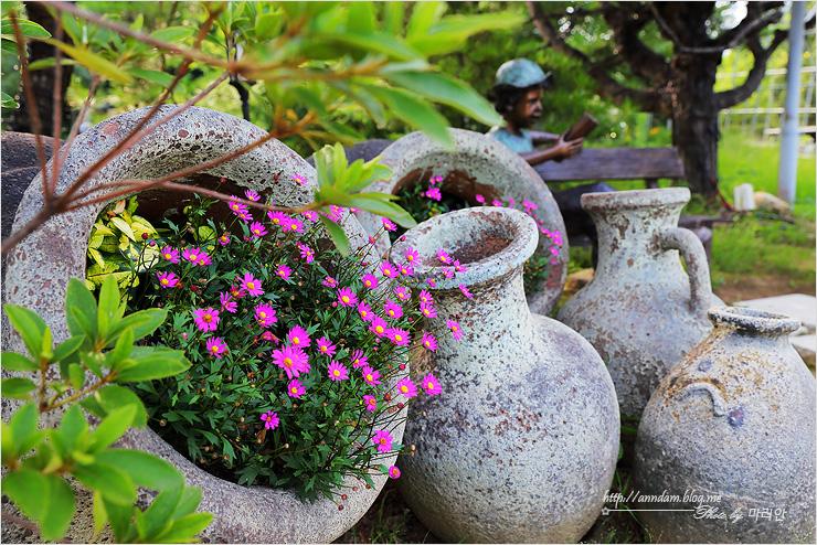 도자기 조각에 자란 꽃