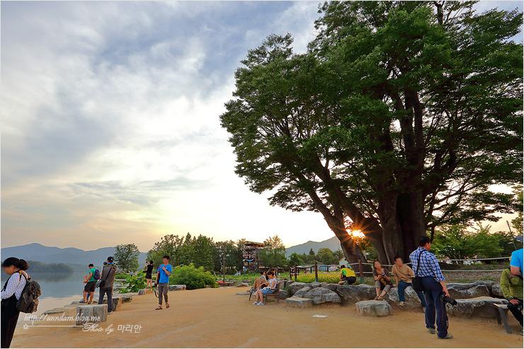 커다란 느티나무와 사람들