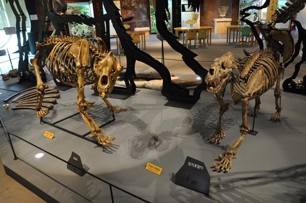 동물 화석들