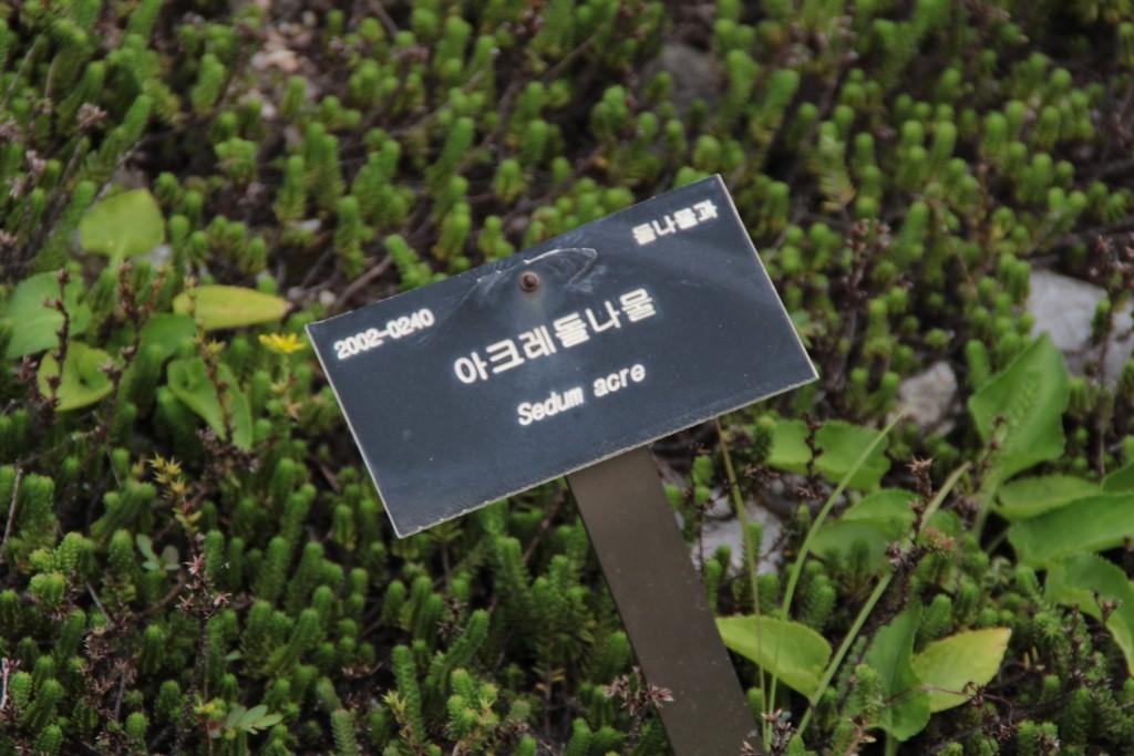 어메이징파크,비둘기낭,평깅식물원이동갈비 249