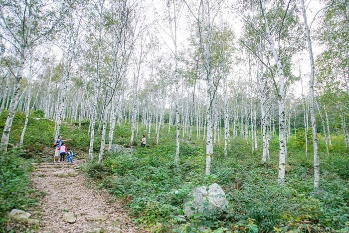 서후리숲 016