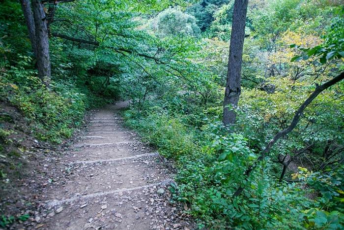 서후리숲 017