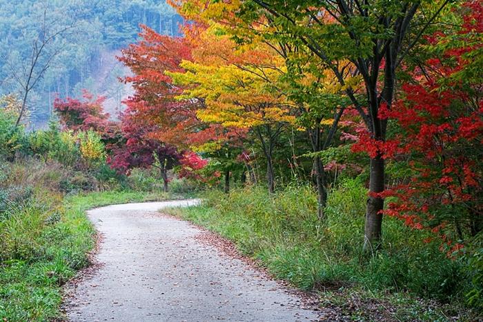 서후리숲 022