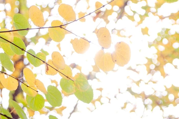 율봄식물원 012