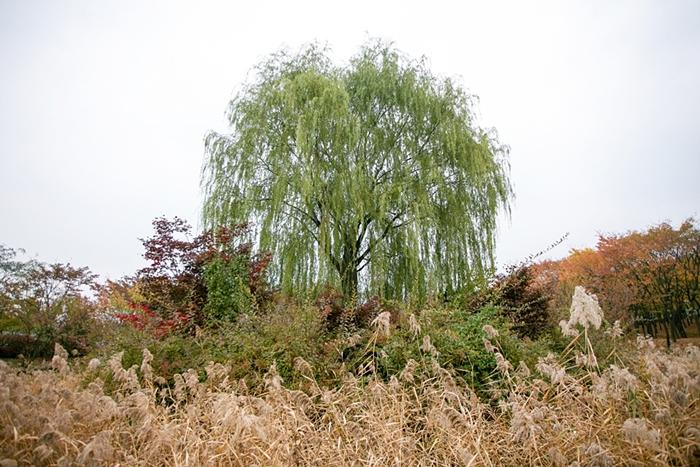 나무고아원 004