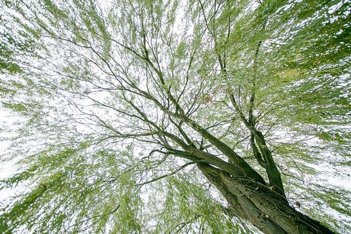 나무고아원 005
