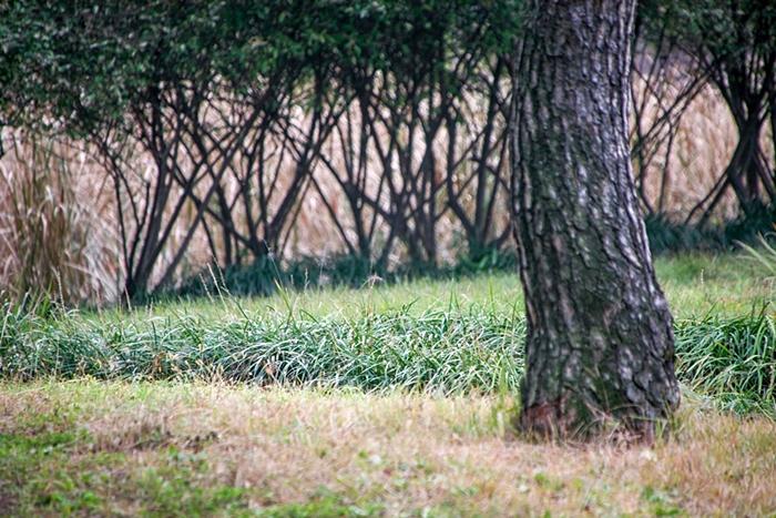 나무고아원 021