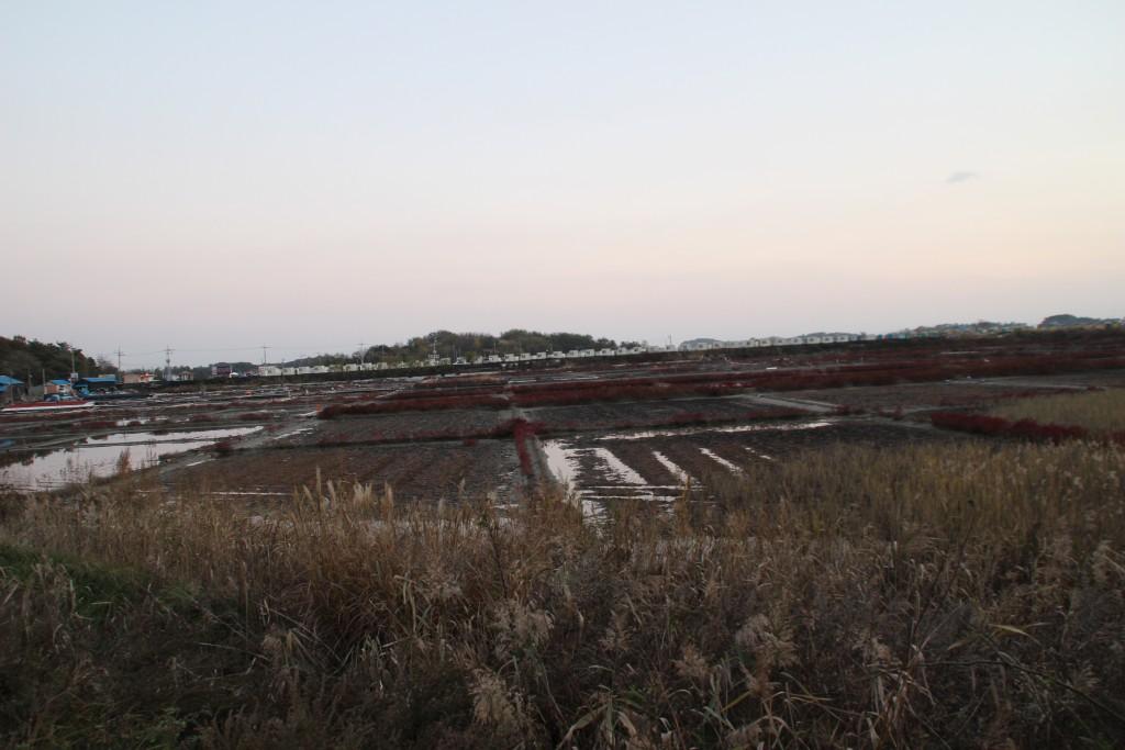 대부도,염전,대부광산,당산,누에섬 276