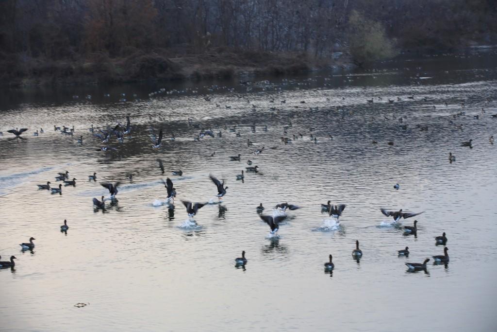 저수지의 철새들
