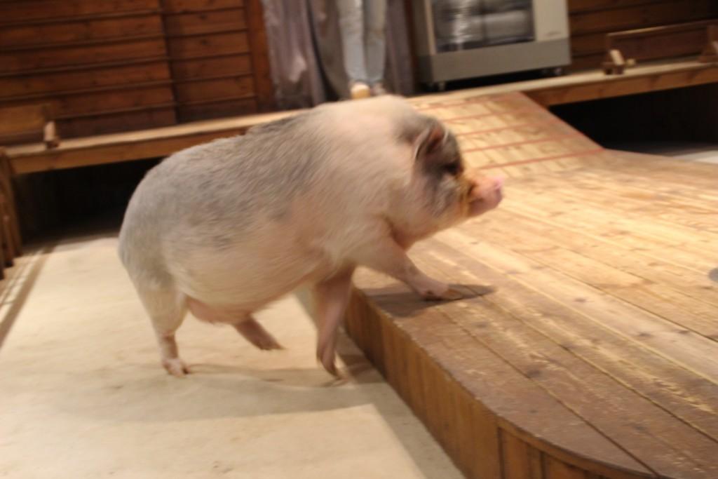 와우목장,돼지박물관 058