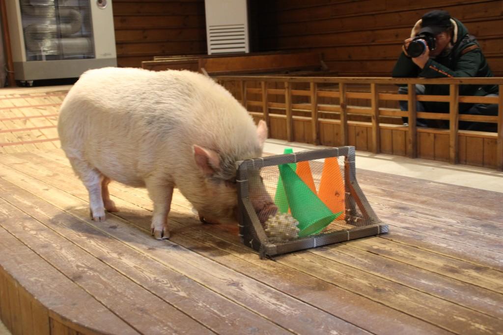 와우목장,돼지박물관 080