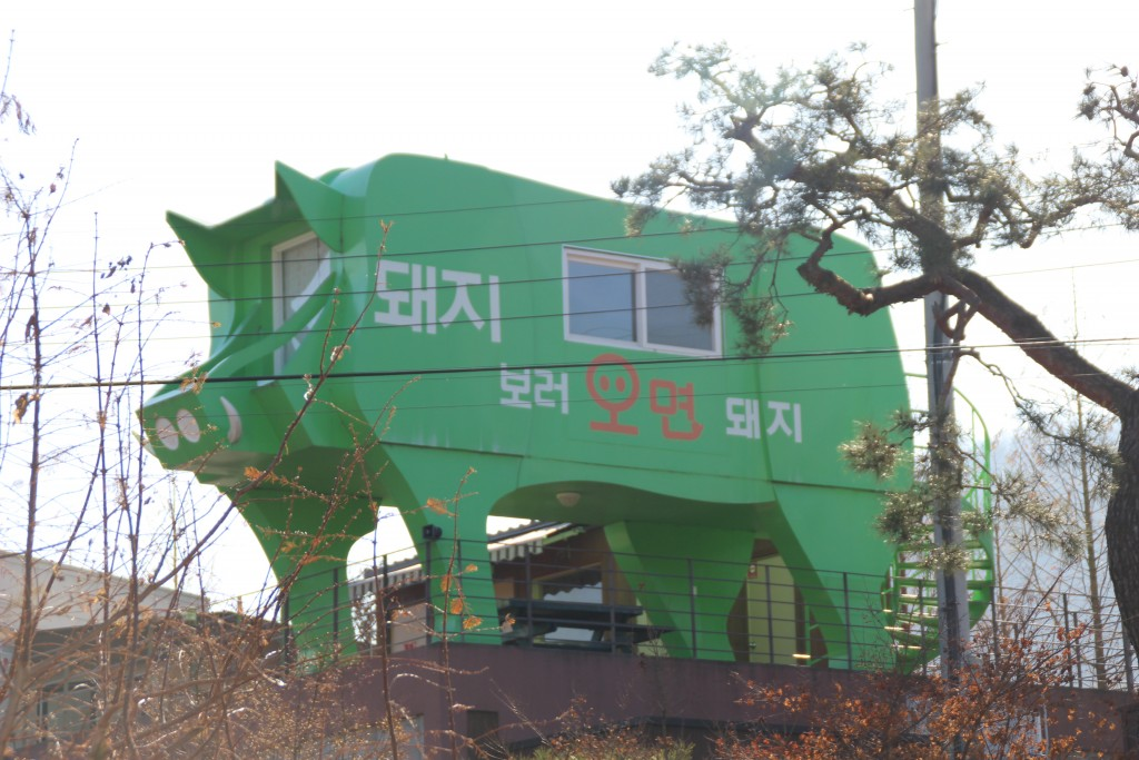 와우목장,돼지박물관 110