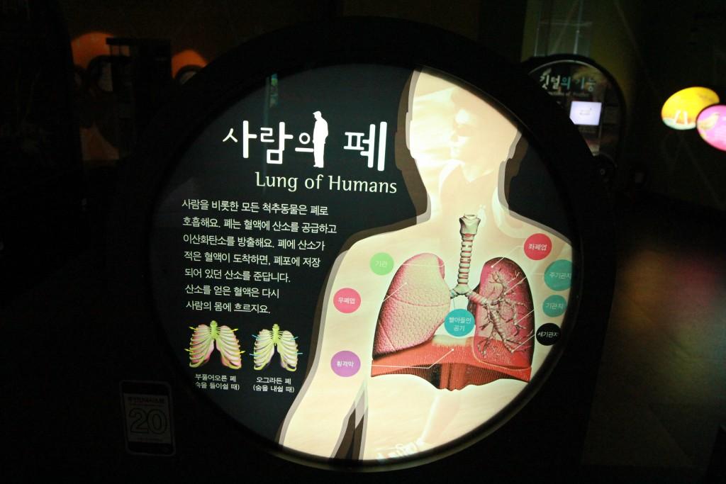 사람의 폐