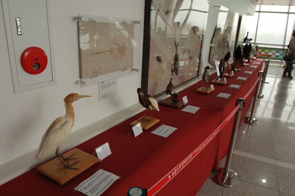 박제된 새들