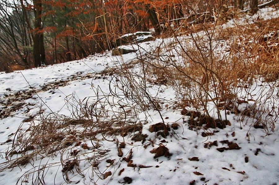 눈이 쌓인 나무와 풀들
