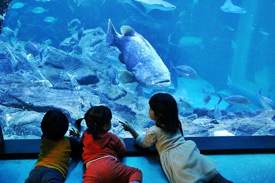 대형물고기를 구경하는 아이들