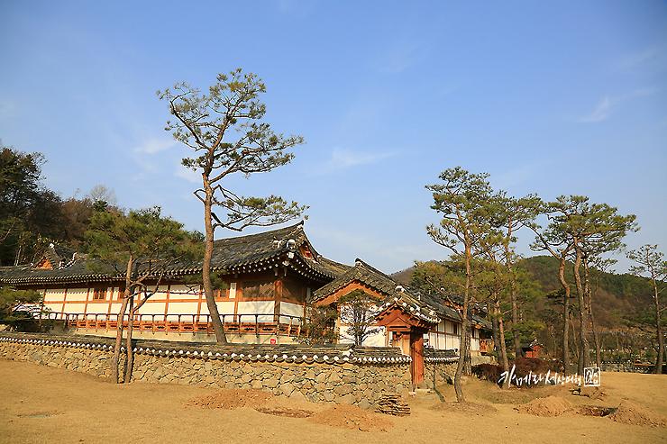 소나무와 한옥건물