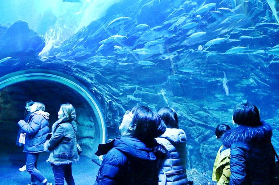 물고기들을 구경하는 사람들