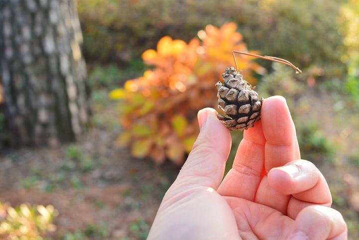 가을을 살펴보며