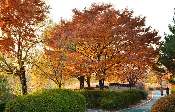 일산호수공원의 가을