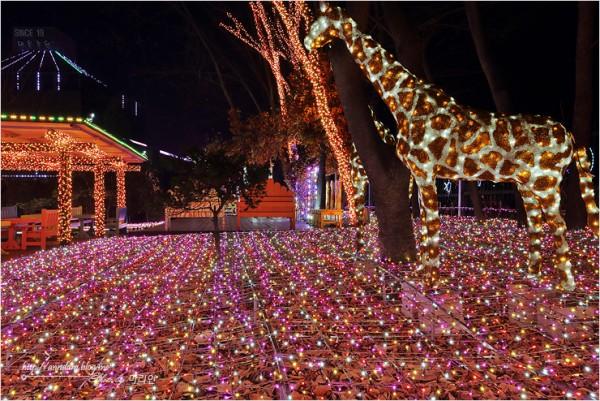 경기도 안산가볼만한곳-안산별빛마을 포토랜드 빛축제