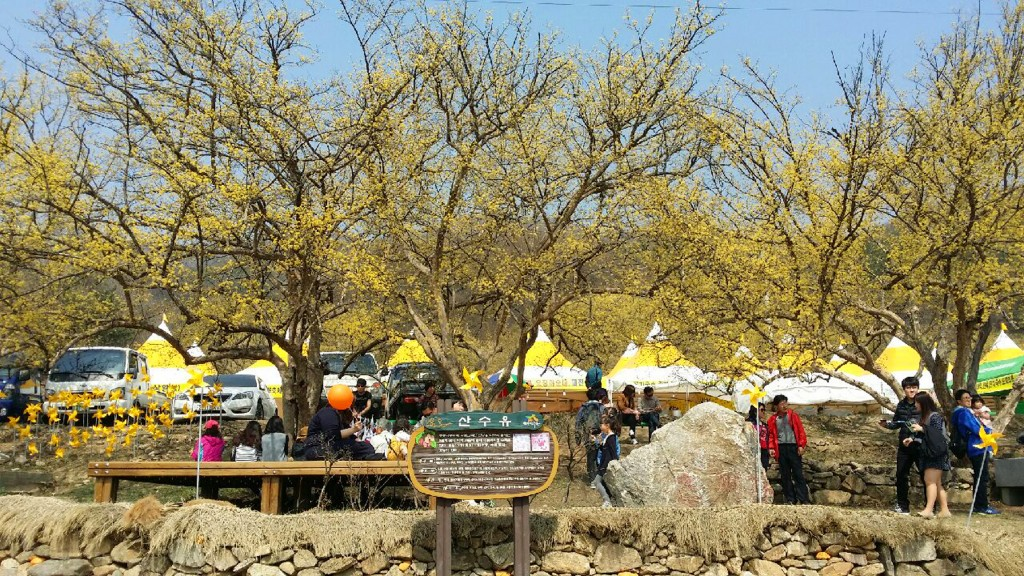이천 산수유 축제