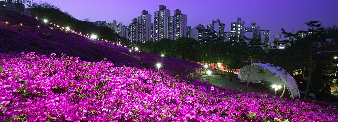 <p>내 마음에 꽃을 꽂고</p> 불어라 봄바람 여행!! 배너