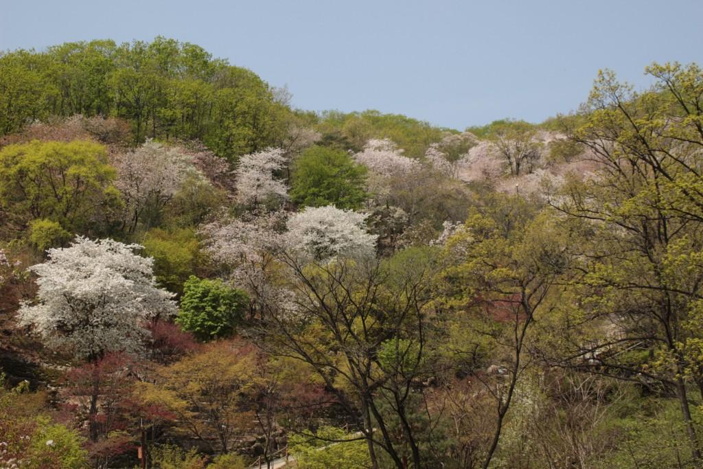 광쥬화담숲,곤지암도자축제 164