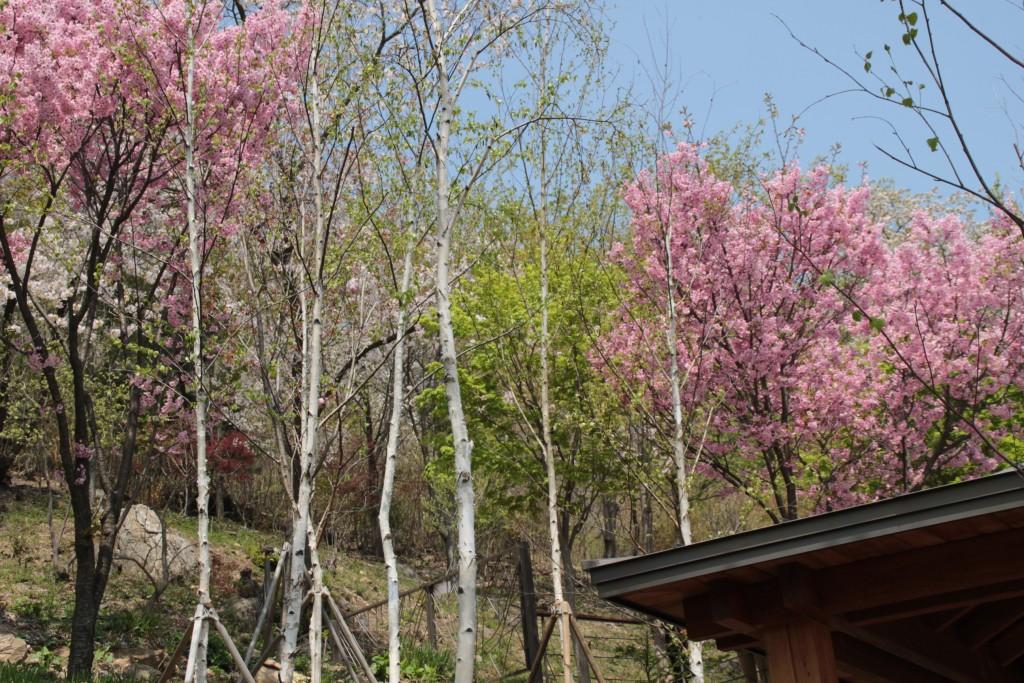 광쥬화담숲,곤지암도자축제 307