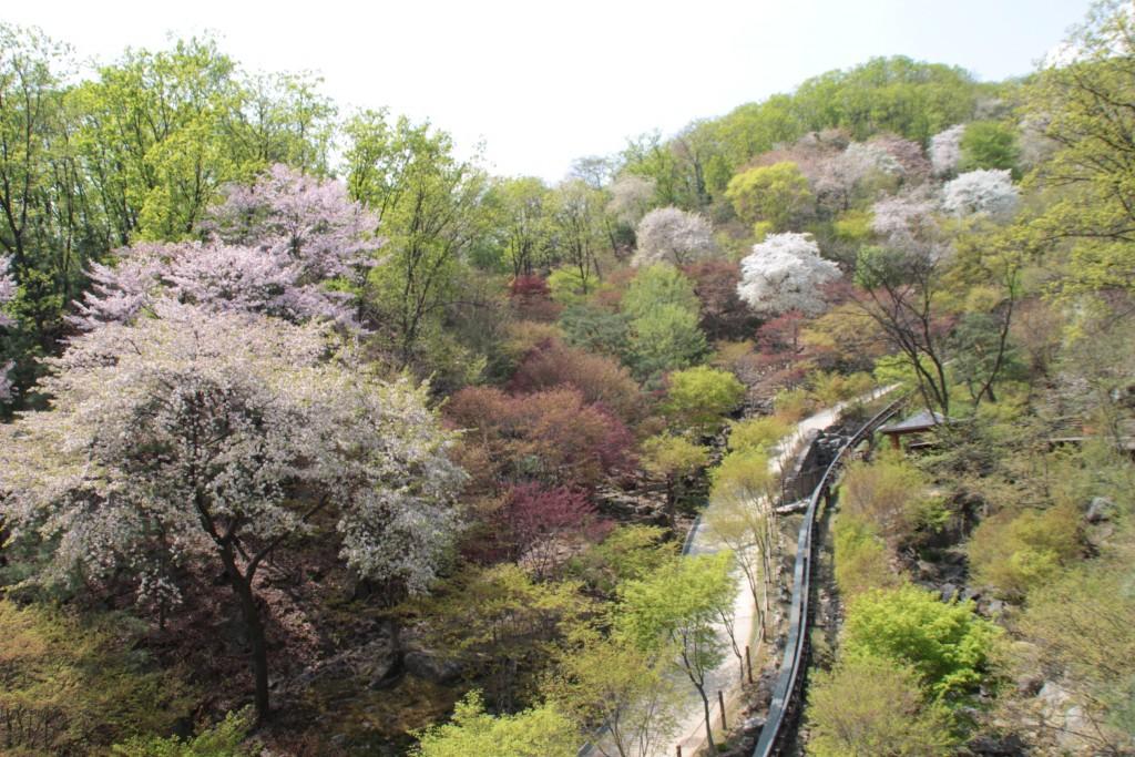 광쥬화담숲,곤지암도자축제 312