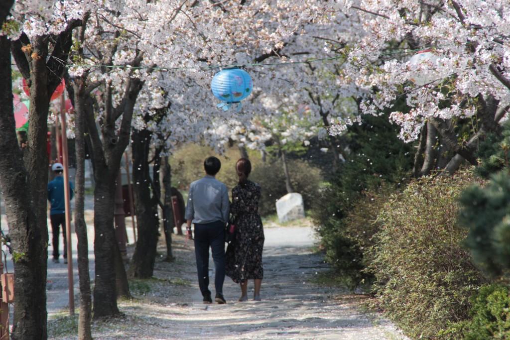 봉녕사,광교마루,경기대,수원행궁,칼국수 063